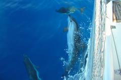 Delfini amici